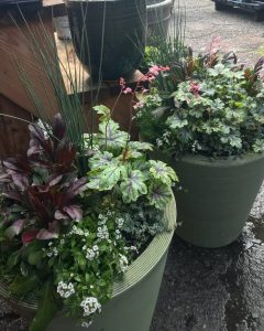 Container Gardens - Green Pots