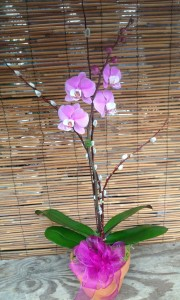 We think orchids are perfect for the Valentine in your life!