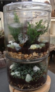 A double tier terrarium - twice the fun!