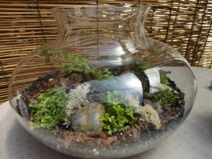 Reindeer moss and small rocks enhance this miniature landscape in glass ~