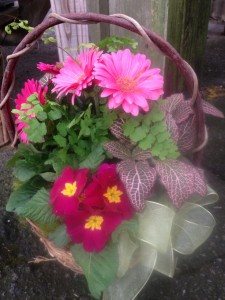 Pretty gerbera daisies in a mixed basket