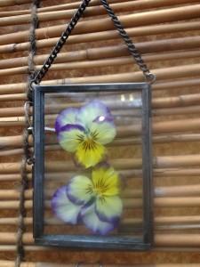botanical...violas