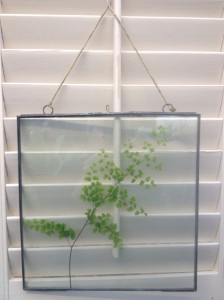 a simple fern frond