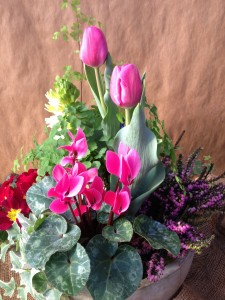 tulips, cyclamen, heather and a fragrant hyacinth mix here...