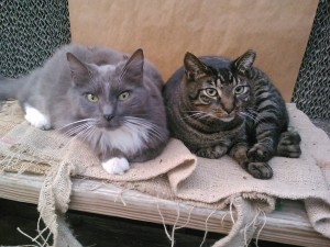 Our shop cats, Gracie & Ozzie