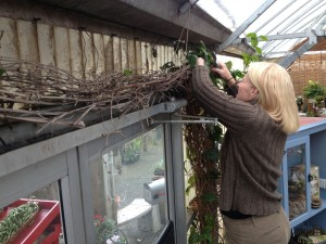 Pinkie works on cutting back the clerodendron - this is done each February without fail!
