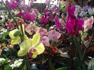 We always have the most beautiful orchids!