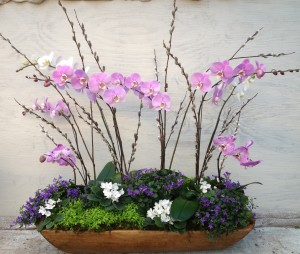 Pastel pink orchids float above campanula, violets and selaginella in this Easter arrangement
