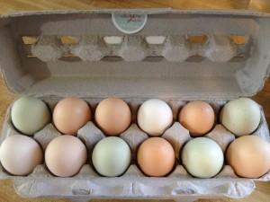 Fresh, organic eggs!