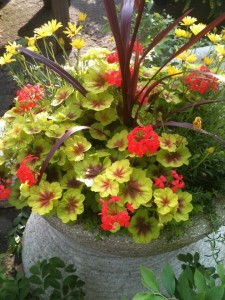 'Indian Dune's' fancy leaf geranium, cordyline and thyme work in half day or full sun...