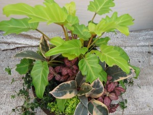 A shade planter - all foliage!