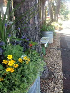 Horse troughs planted with a mix of herbs and flowers for Dyron's Restaurant next door