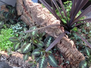houseplants in cork bark...