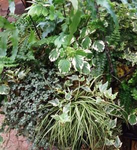 Foliage textures...