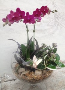 glass, pebbles, orchid and succulents...