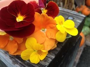 Pansy Dynamite Scarlet/Pansy Matrix Orange/Viola Sorbet Yellow