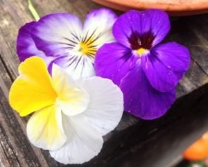 Viola Sorbet Purple Duet/Blue Blotch/Banana Cream