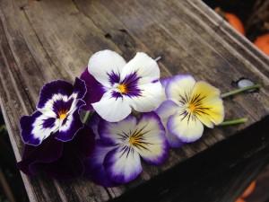 Panola Purple Face & Viola Sorbet Blueberry Cream
