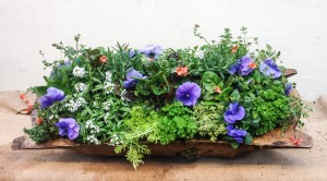 Pinkie filled this dough bowl with pansies, diascia, sweet allysum, lettuce and more...