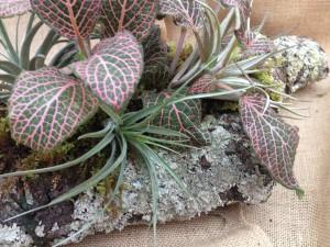 Lichen Branch Planter
