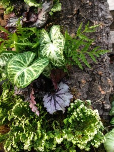 nephthytis, tooth brake fern, rex begonia and selaginella 'Frosty' nestled together...
