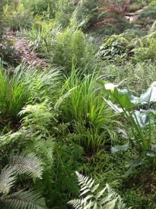 Companions include ferns, acorus, calla lilies and more...