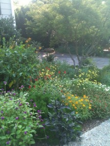 Sunny Bed with Annuals & Perennials
