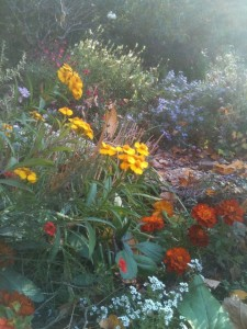 Fall in the Herb Garden