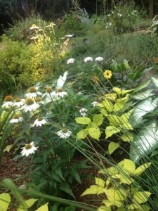 Mid Summer Perennials & Annuals