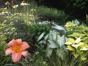 Annual caladiums, coleus and pentas are added to this perennial bed
