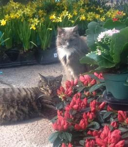 Gracie & Ozzie...