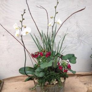 This arrangement was for the wedding of a gardener. Variegated iris, ligularia, rosemary and nicotiana share space with the double spike orchid...