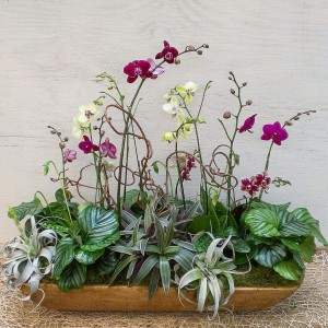 Phael Orchid Arrangement in Dough Bowl