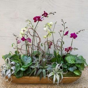 Phael Orchid Arrangement in Dough Bowl