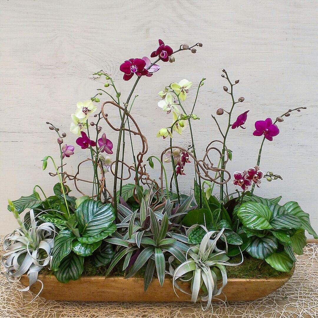 Phael Orchid Arrangement In Dough Bowl Oak Street Garden Shop And Local Market