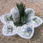 Succulents and Cactus in a Marble Dish