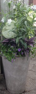 Container Planting - Summer - Part Sun