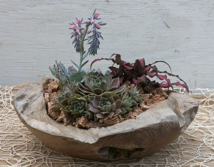 Succulent Planter with Hen and Chicks, Echevaria and Cryptanthus