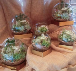 Succulents in terrariums...