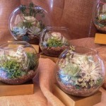 Terrariums for the Lilly Pulitzer Store