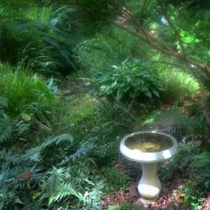 Kris' Woodland Garden
