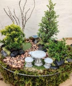Miniature Garden with Dwarf Evergreens
