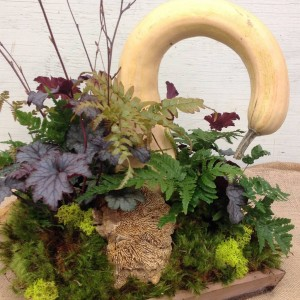 This simple tray became home to a gourd, mushrooms and moss, with Heuchera and autumn Fern adding more rich color...