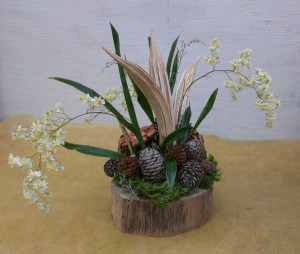 Oncidium Orchid 'Twinkle' Arrangement With Okra Pods and Pinecones