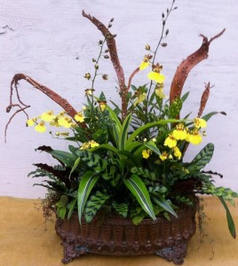 Molly's spirited fall arrangement with bright yellow Oncidium orchids...