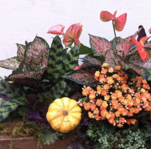 A colorful fall piece Molly created using houseplants and mini pumpkins...