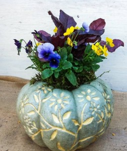 Dená carved this pretty blue pumpkin, and daughter, Molly, planted it...