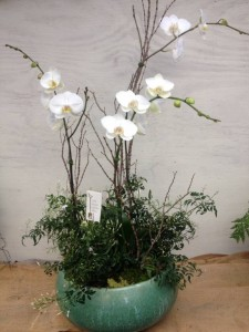 Holiday Orchid Arrangement with Phalaenopsis Orchids and Jasmine