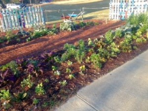 Mid-December. Mulched and growing...