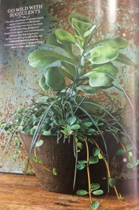 Large rounded leaves of a flap jack kalanchoe, thin, strappy leaves of an agave and trailing peperomia all combine beautifully in Molly's composition... Photo Courtesy Southern Living